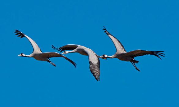 ruta-parque-ornitologico