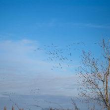 Birding-4