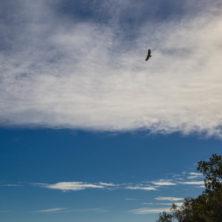 Birding-9