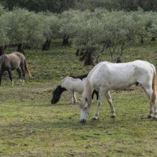 caballos_final